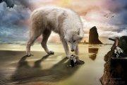 wolf-klein-wz